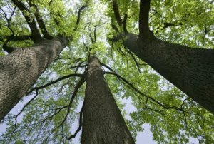 three trees pic